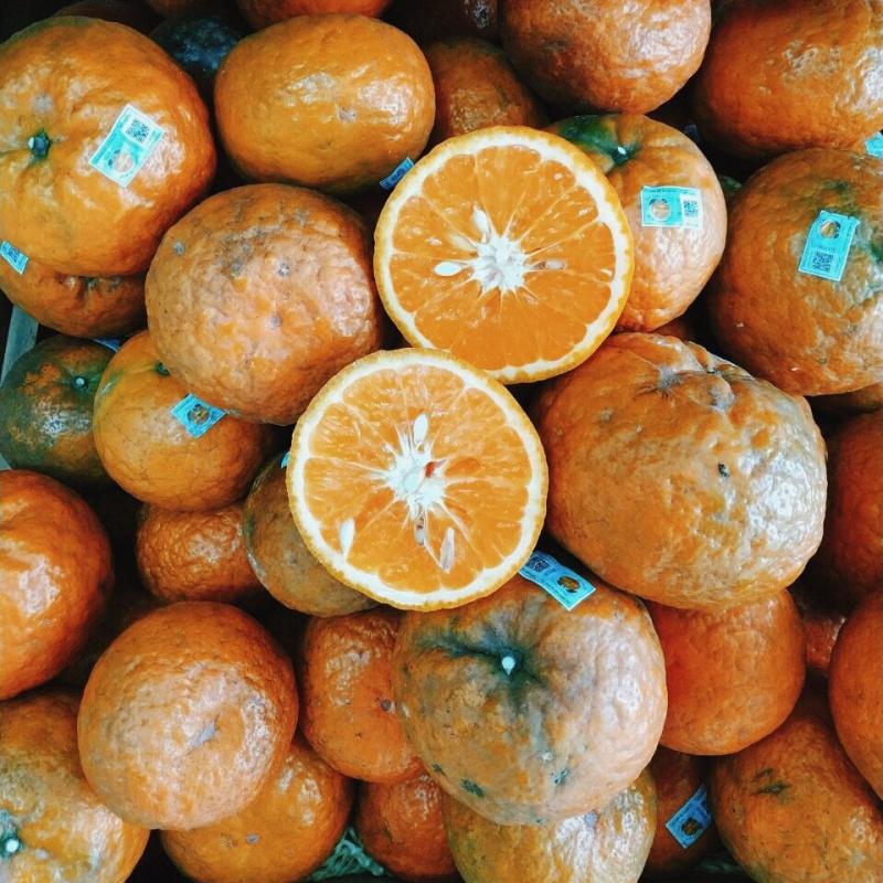 Những trái cam tươi, mọng nước, ngọt lành tại Bắc Quang - Hà Giang