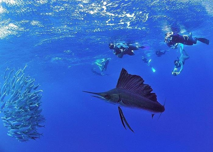 Thế giới đại dương sinh động dưới lòng biển Cancun