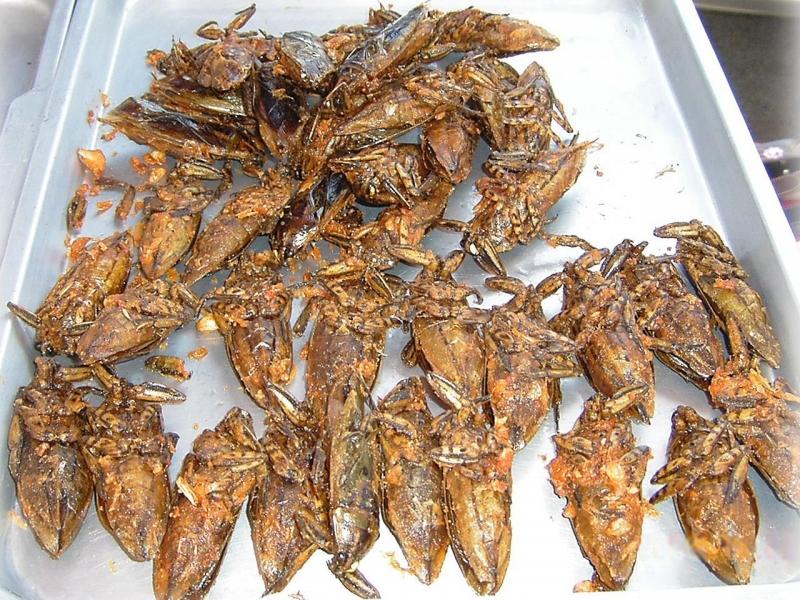 Canh bọ (Bangladesh)