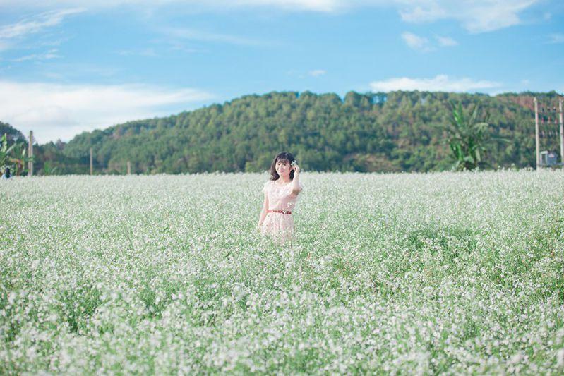 Cánh đồng hoa Cải Trắng Đà Lạt