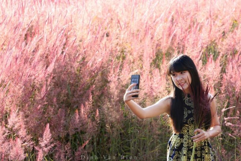 Cánh đồng hoa cỏ hồng ở Đà Lạt
