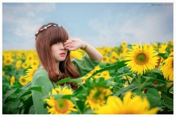 Cánh đồng hoa dướng dương ở Nghĩa Đàn, Nghệ An
