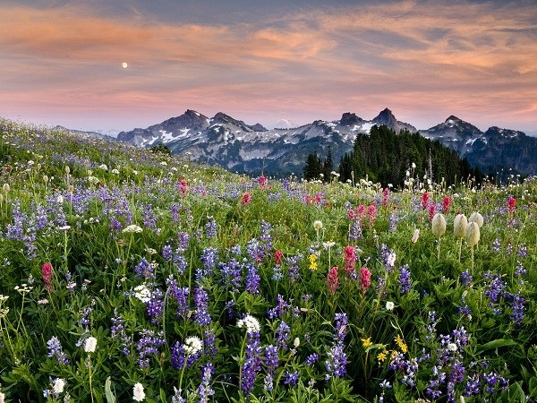 Cánh đồng hoa dại