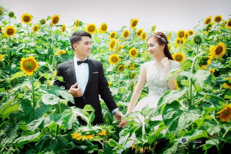 Các cặp đôi lãng mạn giữa cánh đồng hoa hướng dương rực rỡ