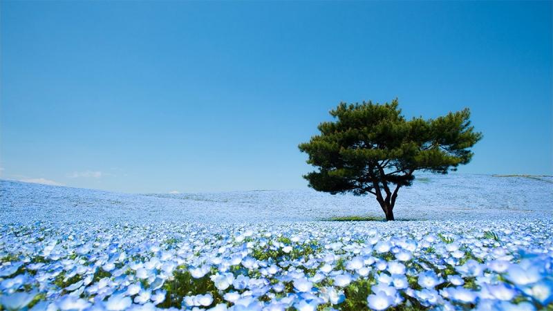 Top 10 cánh đồng hoa đẹp nhất thế giới