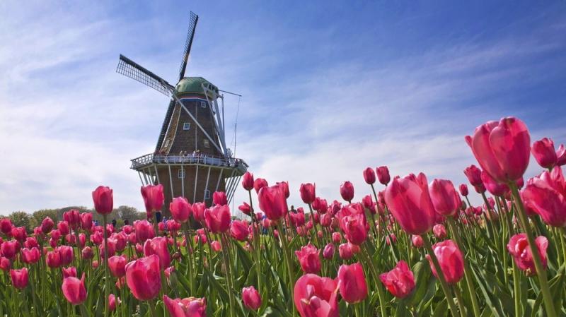 Cánh đồng hoa tulip Keukenhof