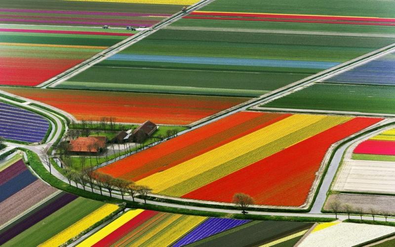 Cánh đồng hoa tulip - Lisse, Hà Lan