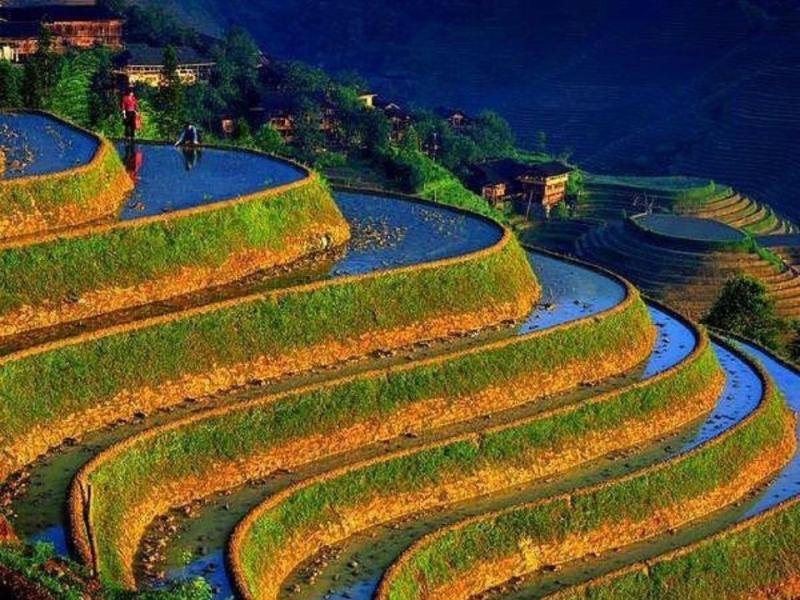 Cánh đồng ruộng bậc thang Cordillera là một trong những di sản UNESCO tại Châu Á