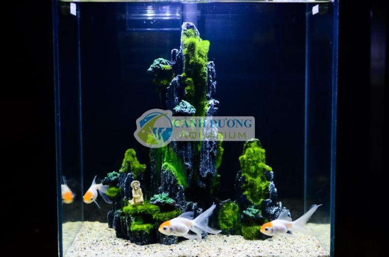 Cảnh Dương Aquarium