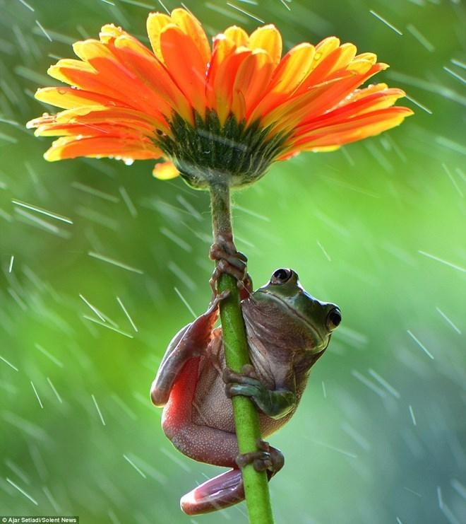 Câu chuyện về chú ếch