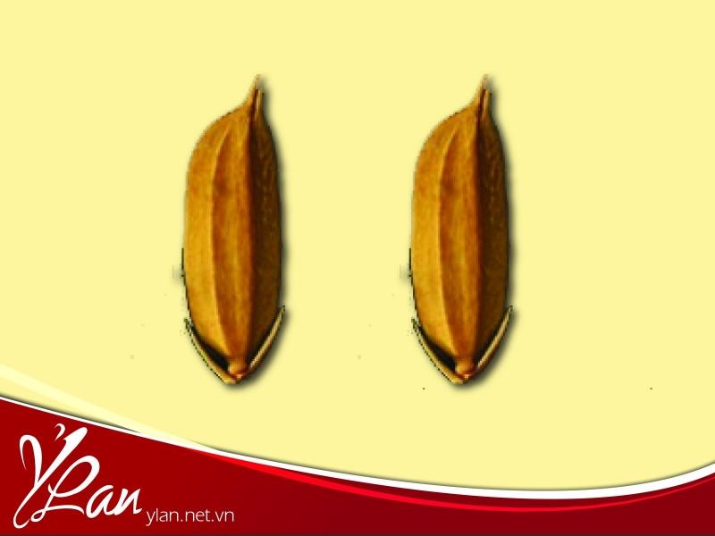 Câu chuyện về hai hạt lúa