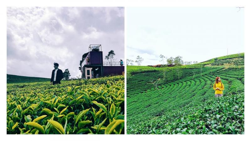 Cầu Đất Farm Coffee