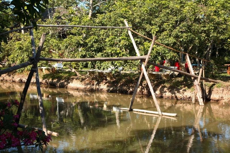 Cầu khỉ Việt Nam