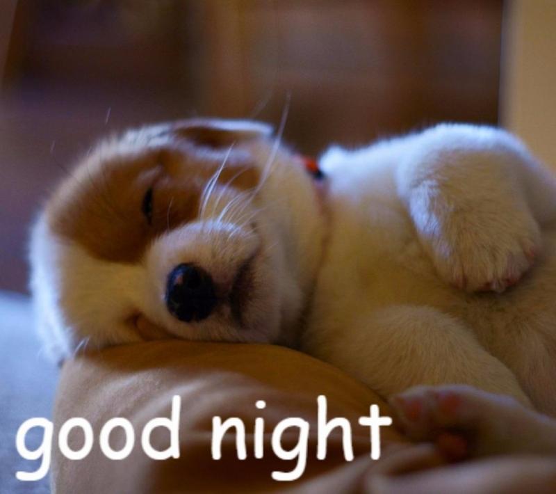 Câu nói chúc ngủ ngon hài hước
