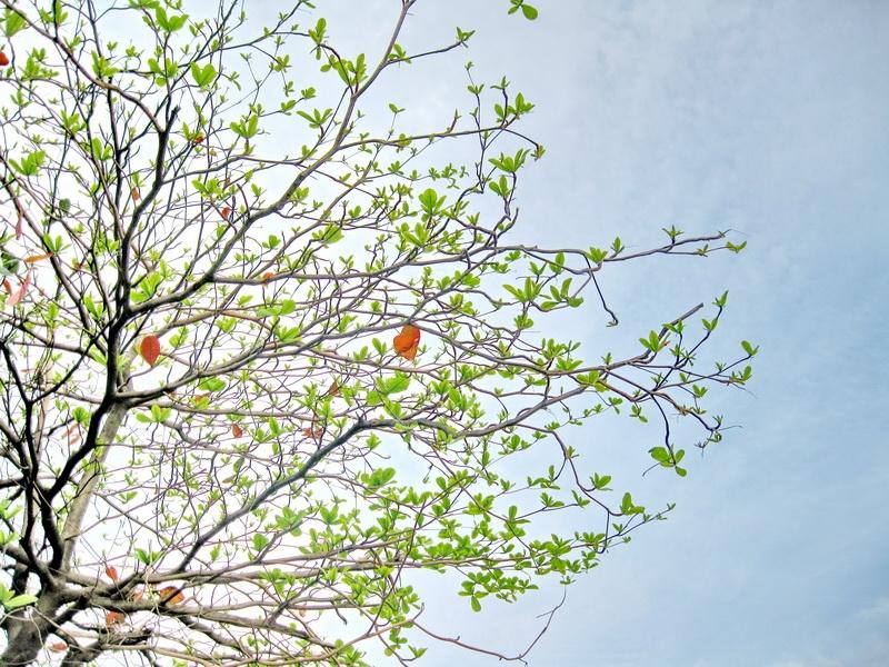 Mùa đông, cây trụi lá, cành khẳng khiu, nhưng bên trong những cành ấy có những lộc non đang giấu mình đợi ngày vươn lên