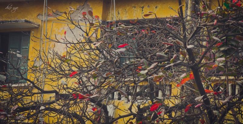 Cây bàng mùa đông
