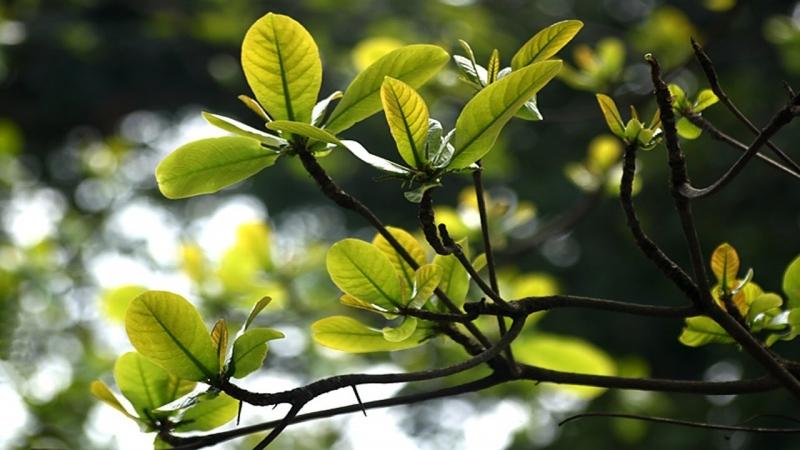 Những chồi non đang nhú lên từ gốc cây xù xì cằn cỗi. Một sự sống mới lại bắt đầu hồi sinh!