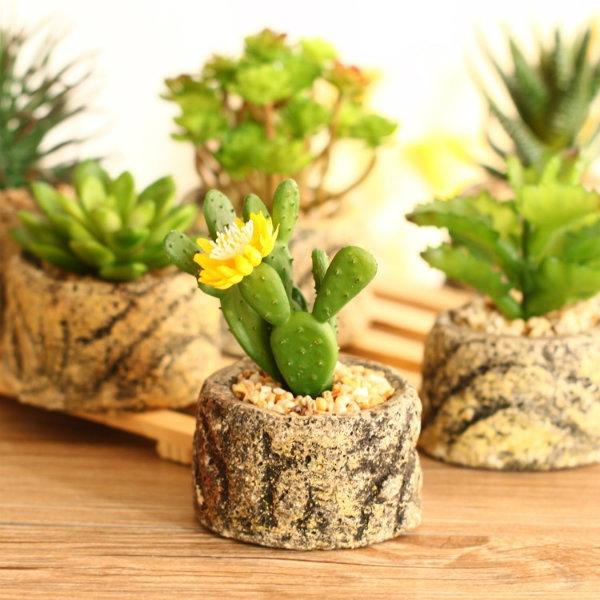 Cây cảnh hoặc chậu hoa mini