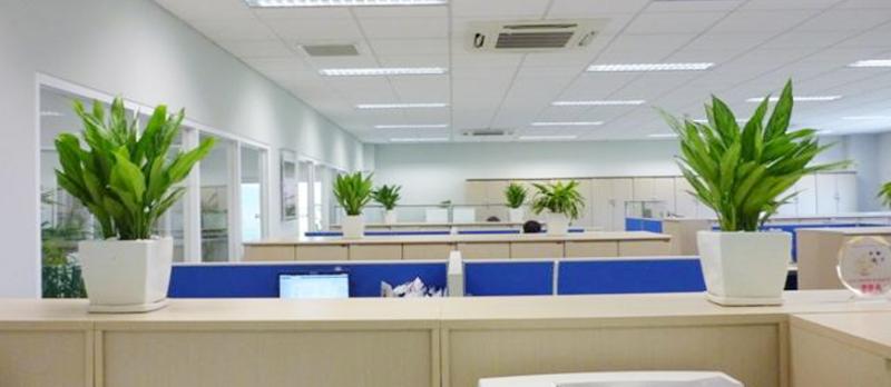 Được sự góp sức của nhiều nhân viên kỹ thuật giỏi và nhiệt tình, công ty Cây Cảnh Văn Phòng Nhật Hiếu đã chiếm lĩnh thị trường bán và cho thuê cây cảnh văn phòng tại Hà Nội trong những năm trở lại đây.