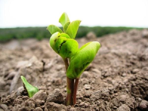 Hạt mầm ấy đã mọc thành cây non xanh mướt.
