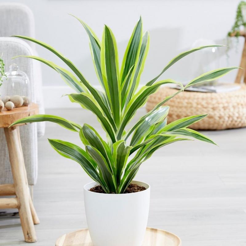 Top 15 loại cây cảnh đẹp nên trồng trong nhà