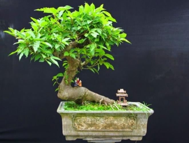Top 15 loại cây cảnh phổ biến được người Việt Nam yêu thích nhất