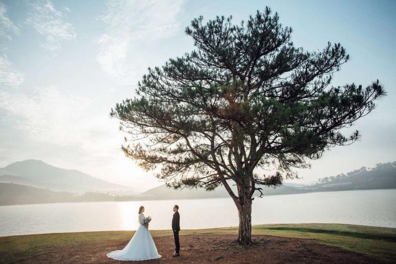 Ảnh cưới bên cạnh Cây thông cô đơn Đà Lạt