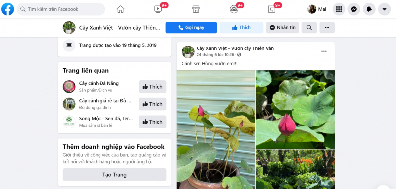 Các sản phẩm cây cảnh được mở bán trên trang Facebook