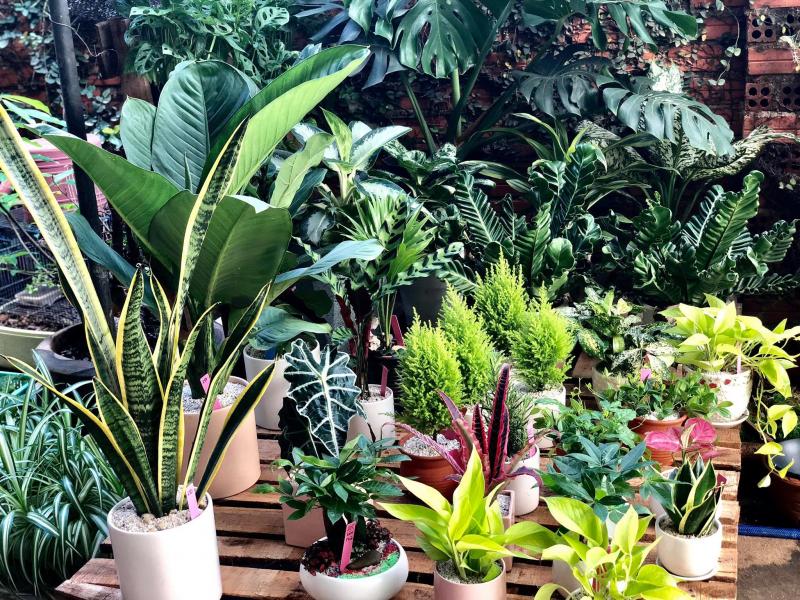 Cây Xinh BMT Garden