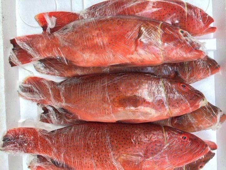Cá đỏ củ- Nguyên liệu chế biến món chả cá đỏ thần thánh