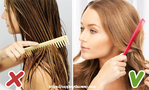 Chải tóc khi tóc ướt