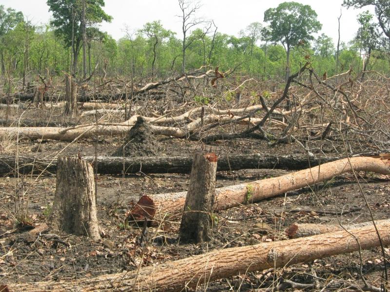 Chặt phá rừng khiến môi trường bị tàn phá nghiêm trọng
