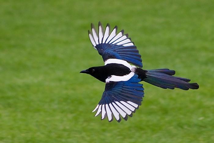 Chim nguyên nhân dẫn đến trục trặc máy bay