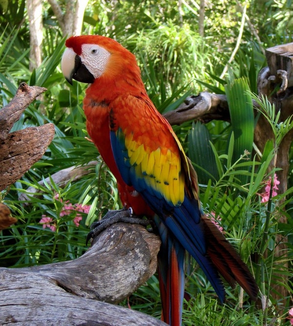 Chim Vẹt với những màu sắc rực rỡ