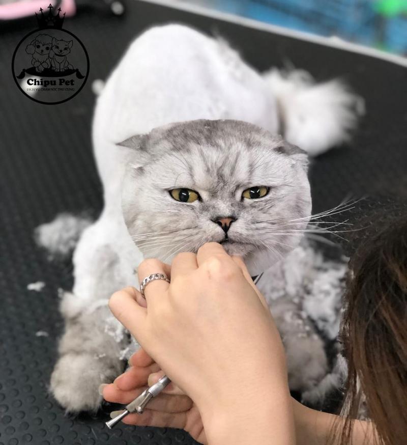 Chipu Pet
