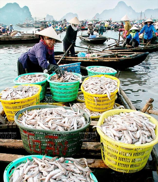 Chợ cá Bến Do