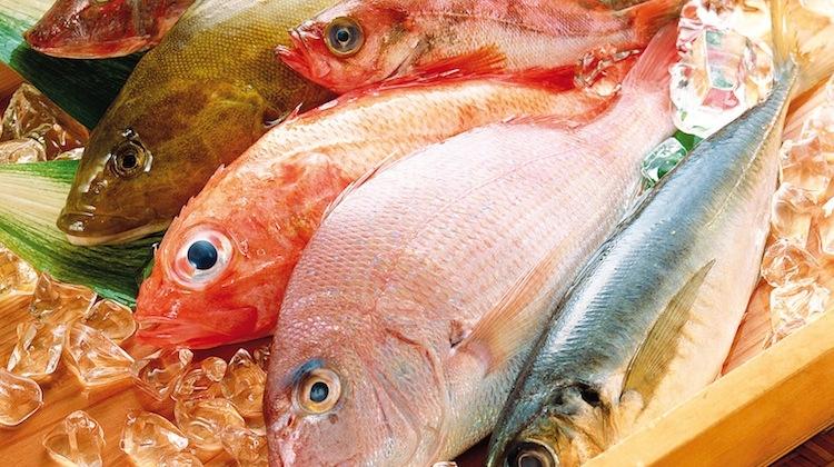Các loại cá tại chợ Diêm Điền rất tươi ngon.