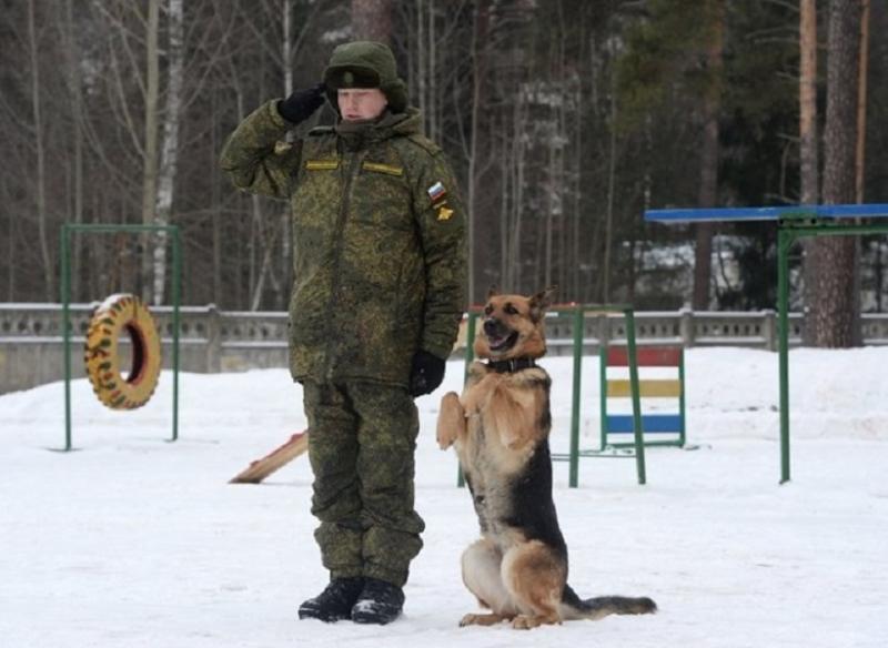 Chó diệt xe tăng