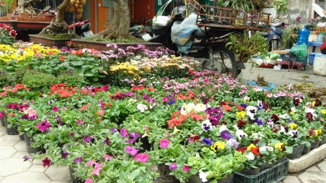 Một góc chợ hoa Hoàng Hoa Thám