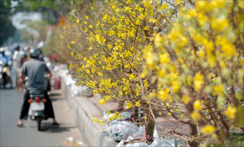 Top 10 Địa điểm bán hoa tết đẹp nhất ở Sài Gòn