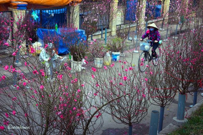 Đào Tết tại chợ hoa Quảng Bá