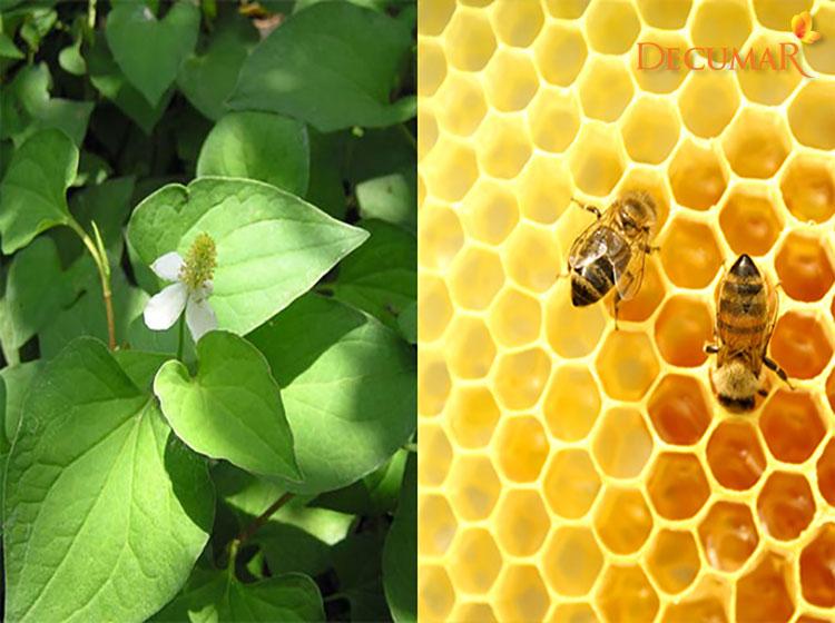 Diếp cá và mật ong