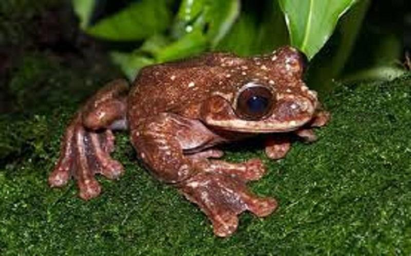 Chàng ếch cô đơn tới lúc chết