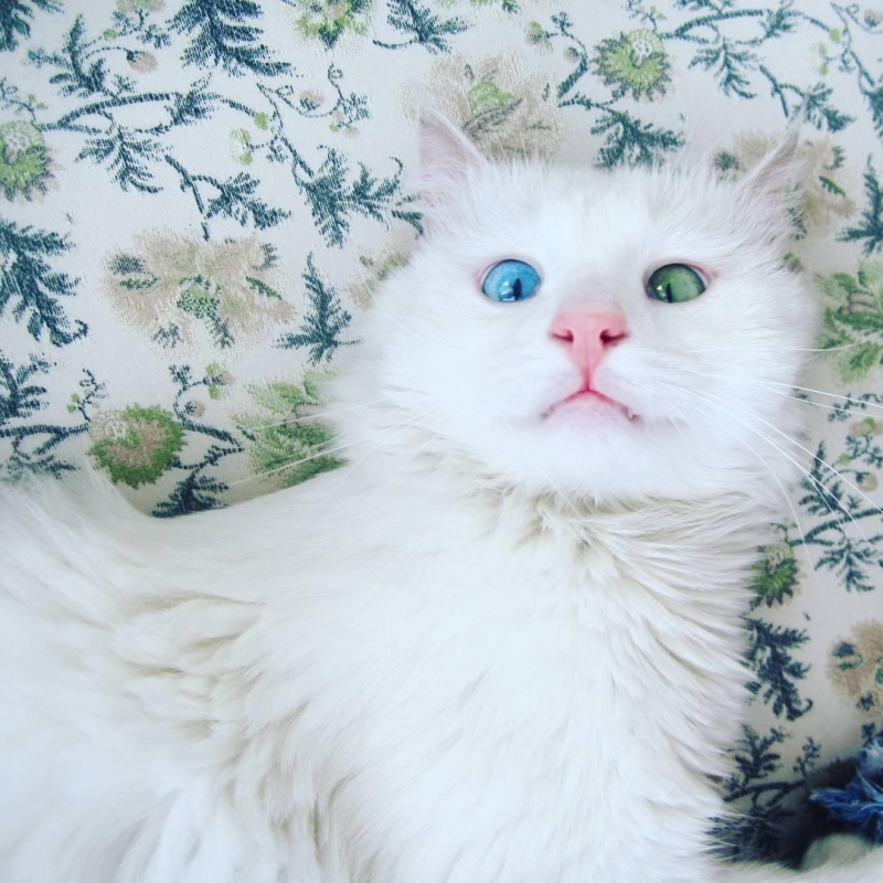 Chú mèo Alos