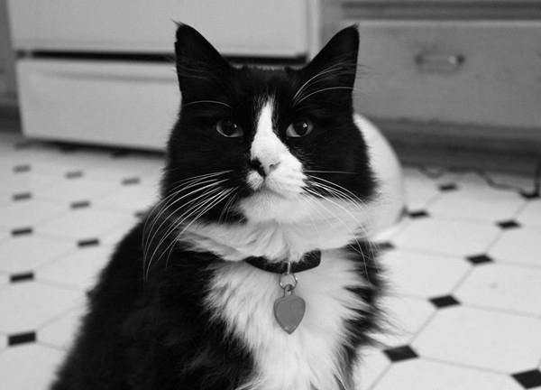 Chú mèo đáng yêu Henri sở hữu một lượng fan đông đảo
