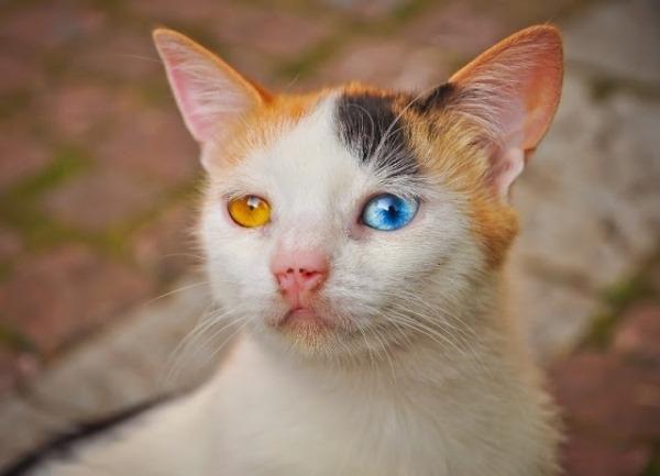 Chú mèo ngoan hiền