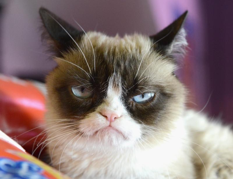 Khuôn mặt Grumpy luôn luôn cau có
