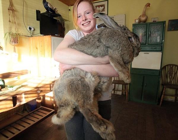 Chú thỏ Ralph to nhất thế giới
