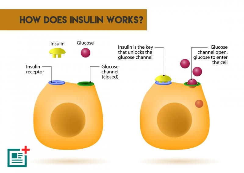 Cung cấp lượng insulin góp phần hạn chế đường máu tăng
