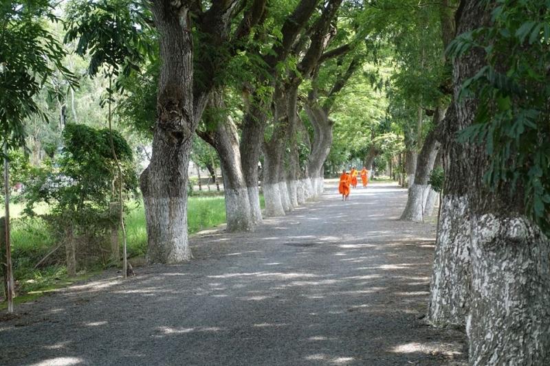 Con đường nhỏ với những hàng còng trăm tuổi xanh mát cả lối đi